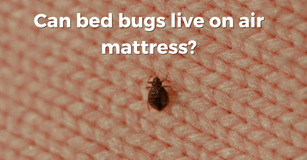 can bed bugs live on air mattresses